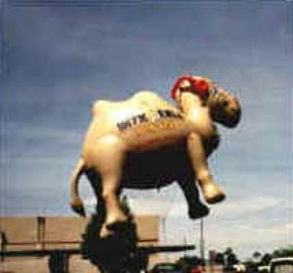 Camel Helium Balloon